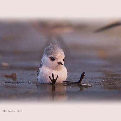 ここだけ!祝★アカデミー賞(R)受賞記念「ひな鳥の冒険」待受け